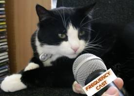 The Frequencycast Cat